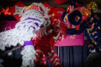 jing wo lion dance calgary 2016 CNY chinese new year T&T supermarket